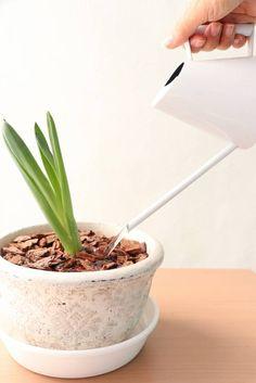 ほったらかしOK! ヒヤシンスの球根を来年も楽しむ方法 : 窪田千紘フォトスタイリングWebマガジン「Klastyling」暮らす+スタイリング Planter Pots, Gardening, Group, Board, House, Home, Lawn And Garden, Homes, Planks