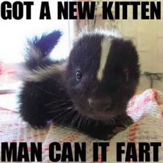 The Internet Needs More Baby Skunks cute animals adorable animal pets baby animals skunk skunks by estelle Funny Animal Memes, Funny Animal Pictures, Funny Photos, Funny Animals, Random Pictures, Funniest Pictures, Animal Funnies, Funny Cat Pics, Cute Animal Quotes