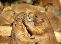 Kissing  animals. Visit Waverider @ http://www.waveridermp3.com #kissing animals #brainwave #brainwave entrainment