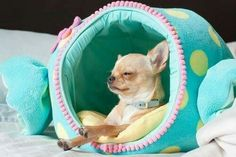 Sweet Chi in the cutest little pod...