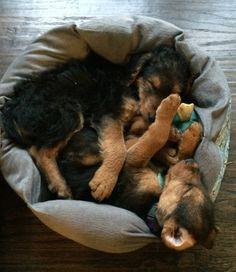 Baby 'Dales sleeping!