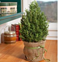 Rosemary Tree    This charming rosemary plant has been trained into a sweet little tree. Keep it organic with the burlap cover or add to your own decorative pot. This tree will keep your house smelling good all season! Make sure it has plenty of light and to follow the watering instructions. Rosemary can be a bit tricky to grow in the house!