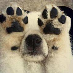 Camera-Shy Puppy!