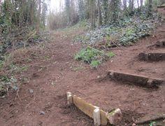 woodland path steps - Google Search