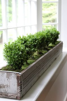 Looking At A Window Box From The U0027insideu0027~ Wonderful To Have Greenery  Indoors Throughout The Winter! For The Desk Area!