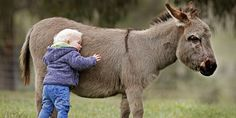 You'll want a miniature donkey after looking at these adorable photos
