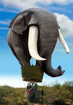 Elephant Balloon :) saying - me next, me next