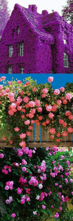 How to decorate the garden in splendid flower seeds?Click the Visit or picture to get it:)