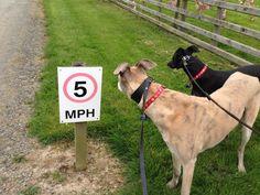I wonder how much a speeding ticket will cost us?