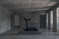 MIGUEL BRANCO -  BLACK DEER