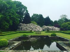 Imagine getting married in front of this beautiful rhododendron bush... #gordoncastle http://www.gordoncastle.co.uk/weddings/