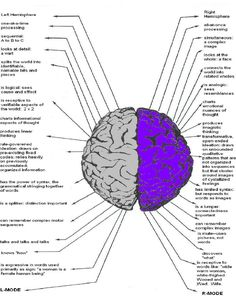 left brain functions include - Yahoo Image Search Results