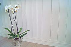 Interior, Plants, Pictures, Indoor, Interiors, Plant, Planets