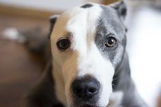 Look at this sweetheart - Sadie is one photogenic pooch!