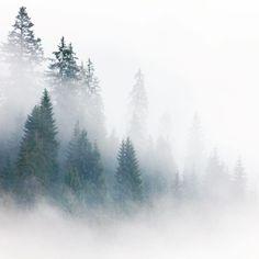 #carpathians #mountains #fog #romania #travel #transilvania #phototravel #карпаты #румыния #мамалыгавкармане by vvtrofimov #carpathians #mountains #fog #romania #travel #transilvania #phototravel #карпаты #румыния #мамалыгавкармане