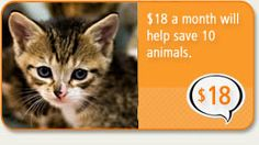 The ASPCA rescues thousands and thousand of animals each year in cruelty free programs. Our kitties were both rescue kitties. I appreciate the work they do. If you can, please support the ASPCA.