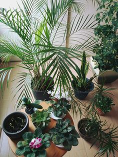 absurditea:  no such thing as too many houseplants :D