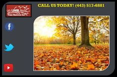 Tree Pruning Columbia can help you get the most from your Maryland yard or commercial property by providing quality tree services in Columbia needed throughout the year. http://columbiatreeservice.co/