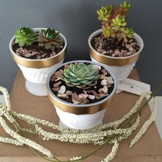 This succulent trio has stolen my heart. Gold, white and full of life. ❤️. Everyone always asks how I don't keep all of my arrangements...let me tell you, it's hard to let them go! These are $25 each. #succulents #succulent #homedecor #houseplant #succulentlife #succulentlove #succulove #plant #indoorgarden #succulentsofinstagram #plants #gardening #decor #614 #cbus #shoplocal #asseenincolumbus