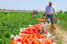 Турецкий сельхозсектор продолжает нести потери