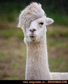 Nuevas tendencias de peluquería 2012 | Risa Sin Más