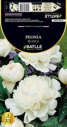 Bulbo de Primavera Peonia Blanca 1 ud
