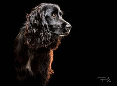 Hearing Dog by Paul Wilkinson on 500px