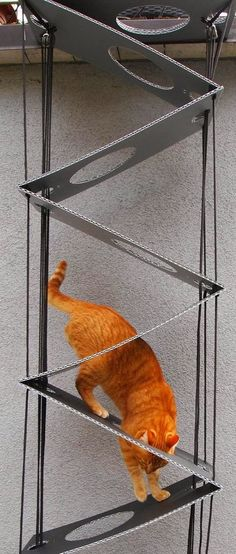 What a clever idea for a collapsible cat ladder. I am blown away. Idea for ladde… What a clever idea for a collapsible cat ladder. I am blown away. Idea for ladder to outdoor cat enclosure via window. Cat Castle, Cat Stairs, Cat Climber, Gatos Cat, Outdoor Cat Enclosure, Home Decoracion, Cat Run, Cat Towers, Cat Playground