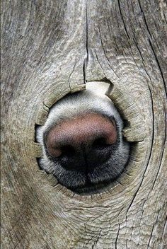 7 Things You Never Knew Your Dog's Nose was Capable Of
