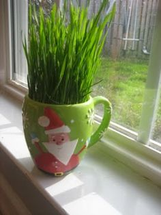 Wheat Grass Mugs - Cute and healthy edible gift idea :)