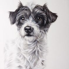 Tilly. Pet Portraits Cats and Dogs Drawings. By Zoe Fitchet.