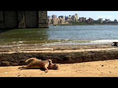 Mystery monster shocks New York // The body of a mystery animal which washed up on a New York beach has sparked a wave of conspiracy theories. Pic: YouTube