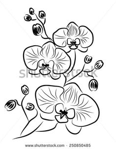 Orchid Vector Stock Photos, Images, & Pictures | Shutterstock