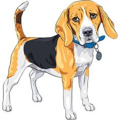 Buy Vector Sketch Serious Dog Beagle Breed by Kavalenkava on GraphicRiver. vector color sketch serious dog Beagle breed standing with blue collar Animal Sketches, Animal Drawings, Beagle Art, Baby Beagle, Beagle Breeds, Cute Beagles, F2 Savannah Cat, Pet Style, Dog Vector