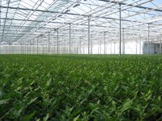 D-FUSE floriculture gives ideal distribution of light, no shadow, equal light level.