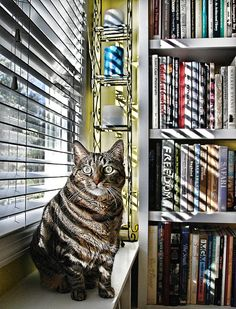 Library Cat & http://www.pinterest.com/pin/469852173595942688/