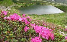 Parcul Naţional Munţii Rodnei este un adevărat colţ de rai, iar cei care se îndoiesc de acest lucru sunt invitaţi să-i afle secretele şi să-i admire peisajele de vis, care par ireale. Colţul de rai din inima Transilvaniei atrage de secole biologi şi botanişti din întreaga lume. Romania, Golf Courses, River, Outdoor, Park, Outdoors, Outdoor Living, Garden, Rivers