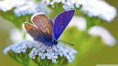 #butterflies #butterfly #nature #beautiful #amazing #bellissime #farfalla #farfalle #flowers #flower #fiori #natura #fiore #incanto #meravigliedellanatura #meraviglie #brown #marrone #purple #viola