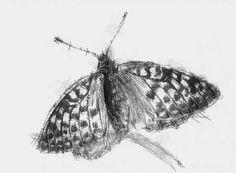 Artist Sean Briggs producing a sketch a day Butterfly #bridge #drawing #http://etsy.me/1rARc0J #sketch