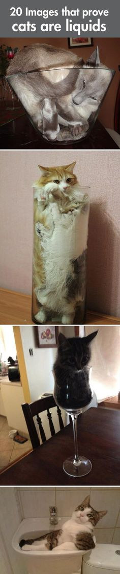 And this is why cats can also be a liquids(: