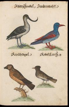 117 [111] - Vögel - Page View - Zentralbibliothek Zürich - EBI04 - e-manuscripta