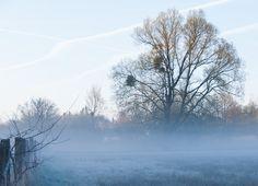 Wenn Dich frühmorgens der Raureif küsst … ein Morgenspaziergang im Teutoburger Wald.   #reiseknipse #nature #Deutschland #urlaub #familien #hundeurlaub #hotel #frühling #nikon #D750