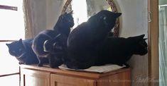 Five Black Cat Veterinary Supervision Squad