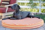 Chew resistant dog beds for large dogs www.k9ballistics.com