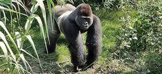 Leahcim #Leahcim #Raven #Jospin #UntilYouFindMe #Africa #AfricaLove #NewAdultBooks #College #BookLove #Gorillas #Conservation #RomanceBooks #RandomHouse #AmberHart #WeNeedDiverseBooks #UntamedSeries #RainForest