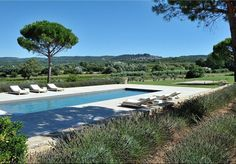 Lavender around the pool in Lacoste, Luberon, Provence