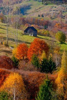 AUTUMN IN THE ROMANIAN CARPATHIAN MOUNTAINS - RUCAR-BRAN PASS