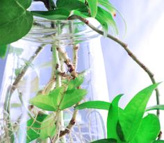 How to Grow Houseplants in Water | Rodale's Organic Life