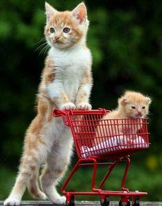"""Çok Şirin. ..  <a href=""""http://musapg.catspray.hop.clickbank.net/""""><img src=""""http://www.catsprayingnomore.com/images/banners/standard/ad3.jpg"""" border=""""0"""" alt=""""Cat Spraying No More"""" /></a>"""