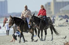 Horses and riders taking part in the 31st annual American Heart Association Beach Ride head north from Lakewood Campground for a 20 mile beach ride on Nov. 3. Equestrians can ride on the sands within the Myrtle Beach city limits through February without a permit.